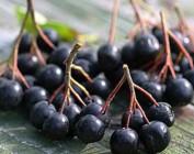 Лечение щитовидной железы с помощью лекарственных растений