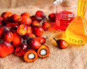Пальмовое масло: так ли страшен черт, как его малюют?