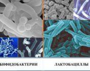 Какие препараты содержат лактобактерии и бифидобактерии?